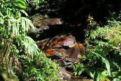 Pequeño río que pasa a través del bosque Foto de archivo