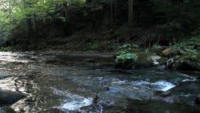 Pequeño río rápido almacen de metraje de vídeo