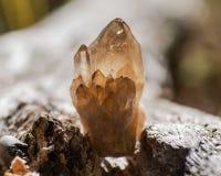 Pequeño racimo de Smokey Citrine de Congo en corteza de árbol fibrosa en el bosque imagen de archivo