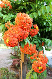 Pequeño ramo anaranjado de las flores Fotos de archivo libres de regalías