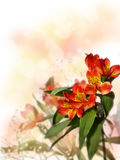 Pequeño ramo de alstroemeria rojo con el gypsophila en un b coloreado Fotos de archivo libres de regalías