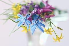 Pequeño ramo de la primavera en el fondo blanco Foto de archivo