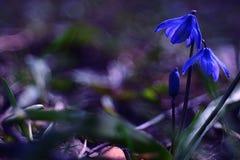 Pequeño ramo de la primavera en el fondo blanco Fotografía de archivo libre de regalías