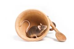 Pequeño ratón hambriento en un cuenco de madera vacío Imágenes de archivo libres de regalías