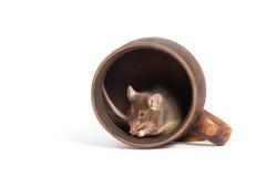 Pequeño ratón hambriento en una taza vacía Fotos de archivo libres de regalías