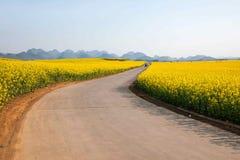 Pequeño remiendo de la flor del canola de la flor de Luoping en el lado de un camino rural Bazi Fotografía de archivo