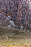 Pequeño ser humano en las montañas grandes Imagenes de archivo