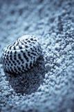 Pequeño shell del mar en la orilla de una playa Fotografía de archivo