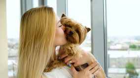 Pequeño terrier de Yorkshire en las manos de la mujer rubia joven que besa su animal doméstico precioso almacen de video