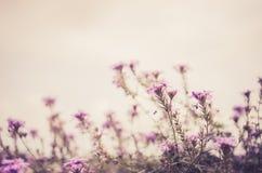 Pequeño vintage salvaje de las flores Fotografía de archivo