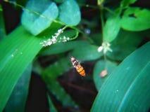 Pequeño vuelo de la abeja alrededor de la hierba fotografía de archivo