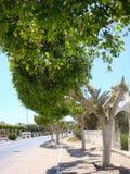 Pequeños árboles arreglados callejón Fotografía de archivo libre de regalías