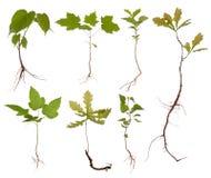 Pequeños árboles con las raíces Fotos de archivo