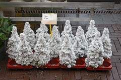 Pequeños árboles de navidad cubiertos con nieve artificial Imagenes de archivo