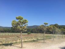 Pequeños árboles en campo Fotos de archivo libres de regalías