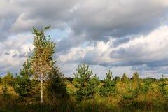 Pequeños árboles en un prado Imagen de archivo
