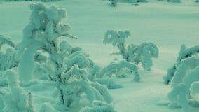 Pequeños árboles jovenes, cubiertos con helada, en el campo de nieve metrajes