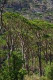 Pequeños árboles verdes en bosque Foto de archivo