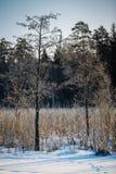 Pequeños árboles y borde del bosque Imagen de archivo libre de regalías