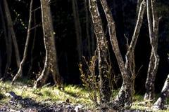 Pequeños árboles y plantas en Sunny Forest imagen de archivo