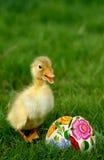 Pequeños anadón y huevos de Pascua lindos Fotos de archivo libres de regalías