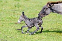 Pequeños burro y m3aquina de hilar Fotos de archivo