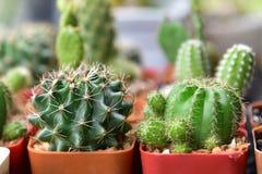 Pequeños cactus y succulents en la floristería El cactus succulen Fotografía de archivo libre de regalías