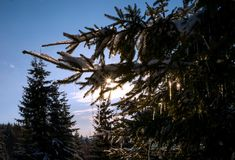 Pequeños carámbanos con el sol que brilla imagenes de archivo