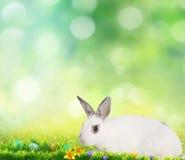Pequeños conejito y huevos de Pascua lindos en hierba verde Fotografía de archivo