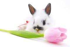 Pequeños conejo y flor imagen de archivo