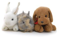 Pequeños conejo y juguetes Fotografía de archivo