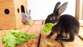 Pequeños conejos fotografía de archivo libre de regalías