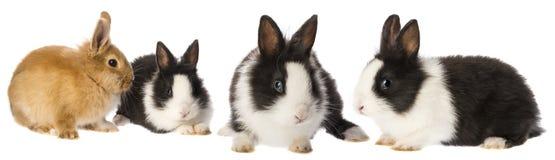 Pequeños conejos imagenes de archivo