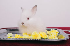 Pequeños conejos decorativos lindos Foto de archivo