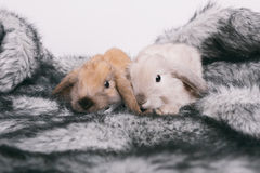 Pequeños conejos decorativos lindos Fotografía de archivo