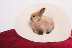 Pequeños conejos decorativos lindos Fotos de archivo libres de regalías