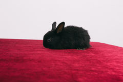 Pequeños conejos decorativos lindos Imágenes de archivo libres de regalías