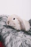 Pequeños conejos decorativos lindos Imagenes de archivo