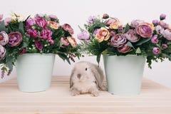 Pequeños conejos decorativos lindos Fotografía de archivo libre de regalías