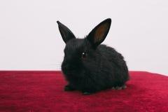 Pequeños conejos decorativos lindos Foto de archivo libre de regalías