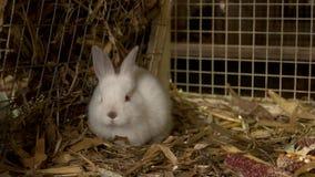 Pequeños conejos lindos en jaula en la granja metrajes