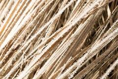 Pequeños copos de nieve en hierba seca como fondo Foto de archivo libre de regalías