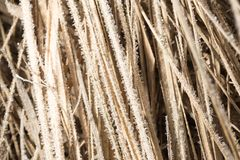Pequeños copos de nieve en hierba seca como fondo Foto de archivo