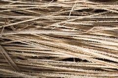 Pequeños copos de nieve en hierba seca como fondo Imagen de archivo libre de regalías