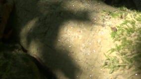 Pequeños cristales en un cierre del árbol para arriba en el bosque almacen de metraje de vídeo