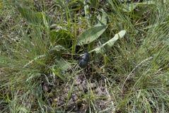 Pequeños escarabajo y mariquita negros Imagen de archivo libre de regalías