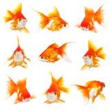 Pequeños fishs del oro fotos de archivo libres de regalías