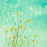 Pequeños floretes amarillos del campo Imagen de archivo libre de regalías