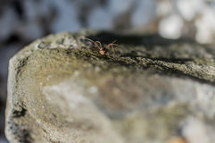 Pequeños funcionamientos de la araña en piedra Imagen de archivo
