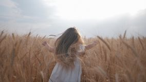 Pequeños funcionamientos del niño femenino entre los oídos maduros del campo de trigo contra fondo del cielo azul durante la esta metrajes